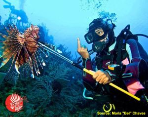 Lionfish Speared