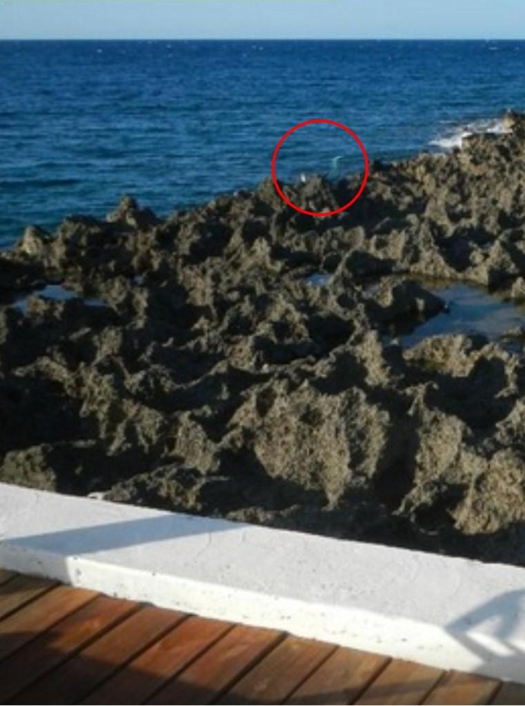 Mermaid Sighting