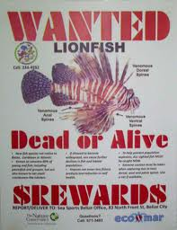 Lion Fish on Shark Tank Show